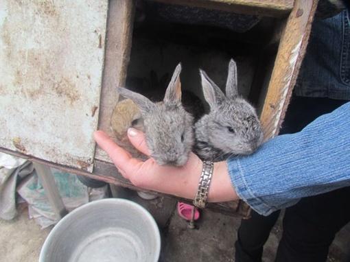 Волки загрызли кролей. Фото: 0629.