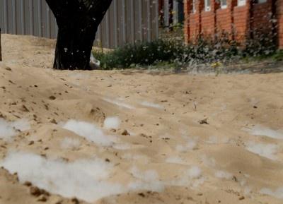 Первыми, кто почувствовал неприятные последствия такого «снегопада», стали аллергики. Фото: www.ilich.in.ua.