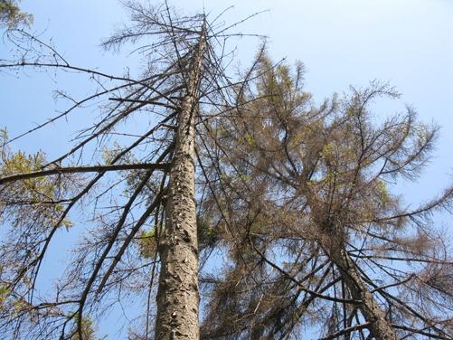 Парк имени Тренева: деревьям тоже не хватает влаги