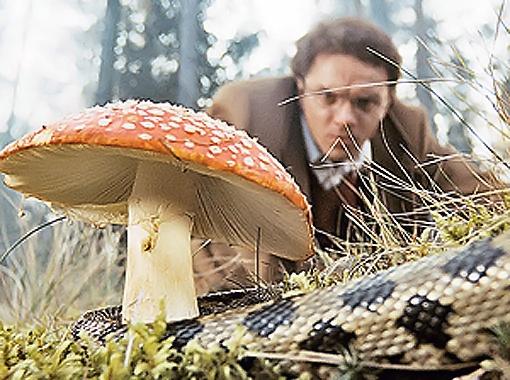 Чудо-грибочки много чего могут показать и рассказать... (Кадр из фильма Generation П).