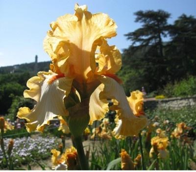 А цветы