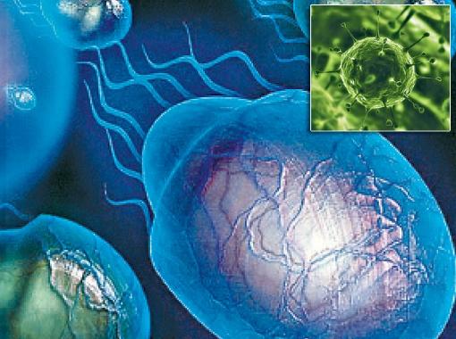 Некоторые виды одноклеточных, вирусов и даже морских беспозвоночных группы лорицифер живут и размножаются в бескислородной среде.