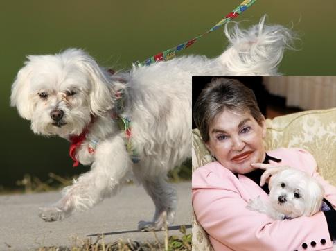 Леона Хелмсли обожала свою болонку и завещала ей кучу денег. Фото: estergoldberg.com