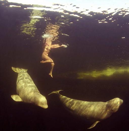 Наталья ныряла в филиале Утришского дельфинария. Фото: Виктор ЛЯГУШКИН (Daily mail)