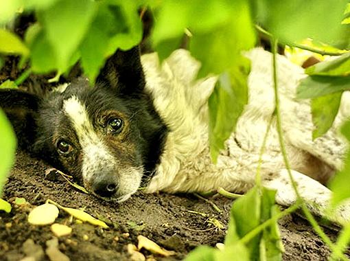 Пес преданно ждет хозяев. Фото Елены Ибрагимовой.