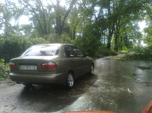 Штормовой ветер ломал деревья. Фото: Павел Колесник.