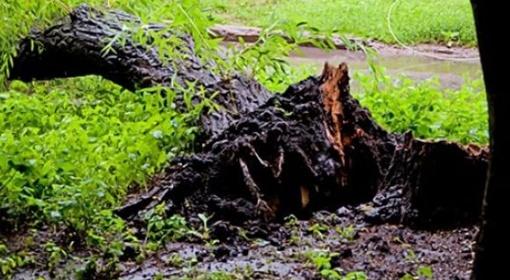 Коммунальщики не успевают убирать поваленные деревья. Фото с сайта 0642.com.ua.