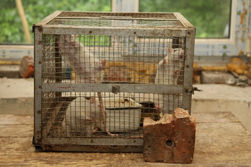В жутких условиях находятся и крысы. Фото: Павел Колесник.