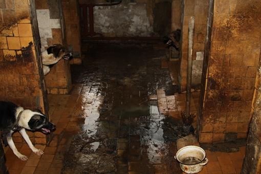 Грязь, вонь и сточные воды. Фото: Павел Колесник.