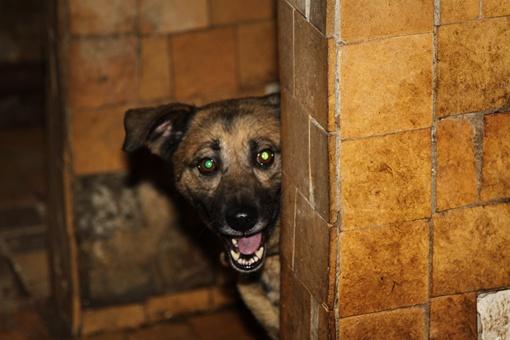 В двух небольших комнатках на цепи сидят 16 собак. Фото: Павел Колесник.