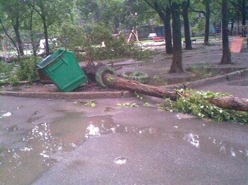 По городу свалено более сотни деревьев. Фото с сайта vgorode.ua.