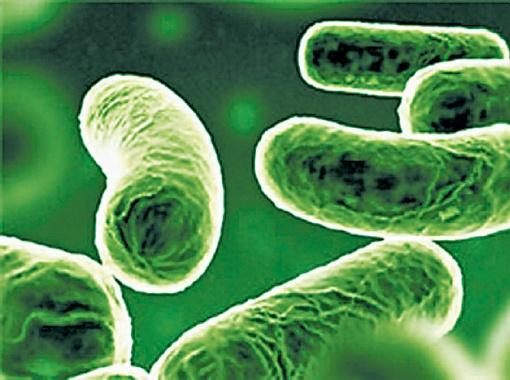 Эта крошечная бактерия может унести много человеческих жизней.
