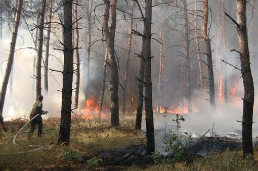 Чаще всего возгорания происходят из-за халатности людей. Фото из архива