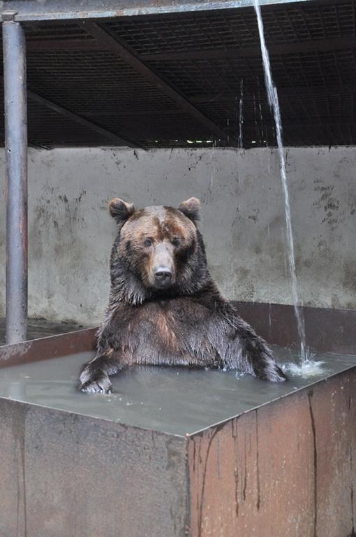 Бедные животные страдают