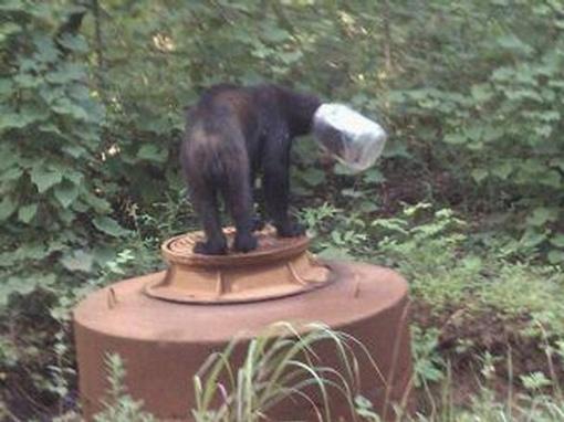 Мишка не мог избавиться от банки. Фото: TWRA