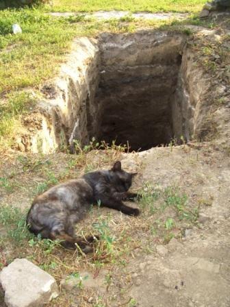 Кот монаха остался без хозяина. Фото: popovo.prihod.ru