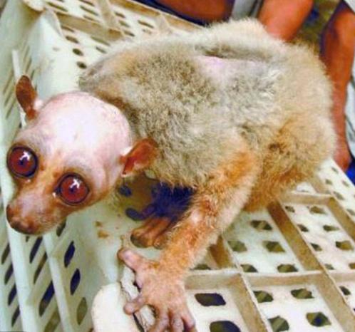 Причину уродства лемура-инопланетянина специалисты пока не установили.