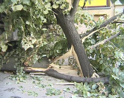 Ветки дерева выбили окна на втором этаже. Фото с сайта magnolia-tv.com.
