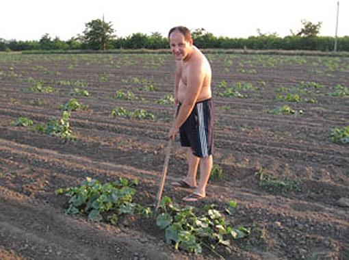 В июле на полях Херсонщины сапают