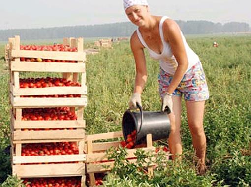 Со здешних полей собирали в 8 раз больше урожая от нормы.