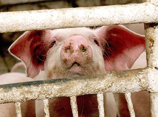 В Украине большой процент мяса производится в частном секторе.