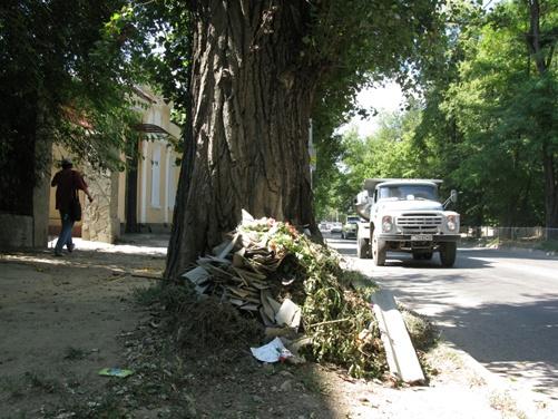 Очередная стихийная свалка на улице Шмидта спряталась за деревом