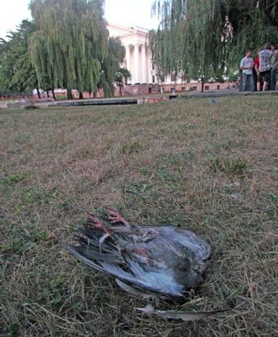 В Краматорске были найдены десятки мертвых птиц. Фото: www.vp.donetsk.ua.