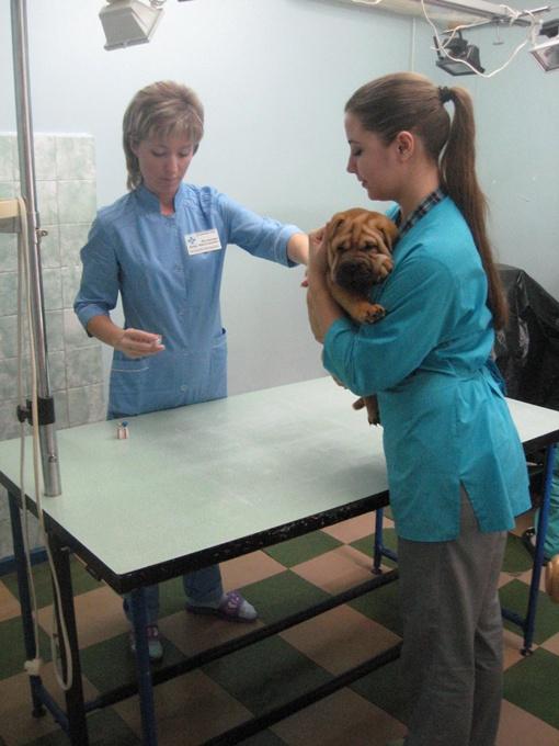 Пациентами ветеринаров становятся не только хвостатые, но и пернатые. Фото автора.