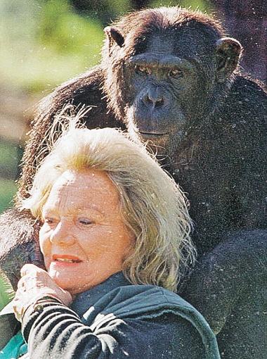 Шимпанзе Калу - настоящая золушка: когда-то аристократка Патрисия О'Нил нашла ее в Конго избитой и привязанной к дереву. С тех пор они крепко подружились...