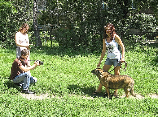 Собаки из питомника