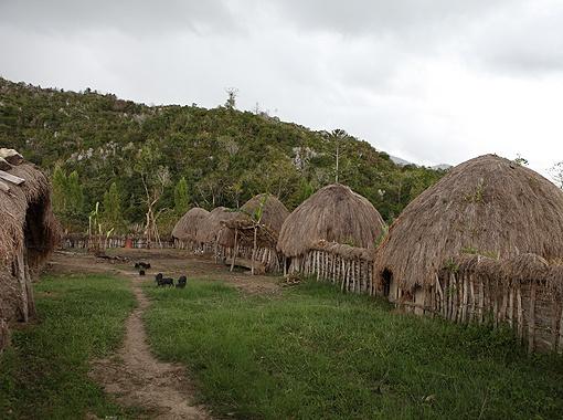 Одна из самых цивилизованных деревень папуасов.