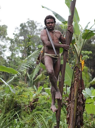 По таким бамбуковым лесенкам, высота которых составляет 10-30 метров, папуасы из племени караваев поднимаются в свои жилища.