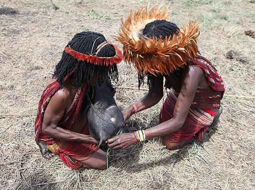 Две женщины привязывают на поводок свинью, чтобы не убежала.