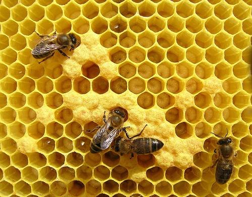 Мы знем толк в пчеловодстве. Фото с сайта anoyr.narod.ru