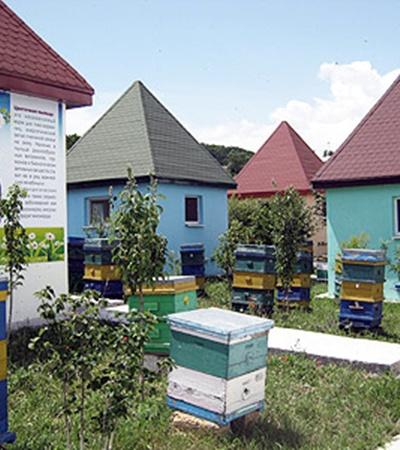 Так выглядит пчелиный санаторий. Здесь можно и меду поесть, и лечебное жужжание послушать.