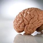 Важные отличия мозга от компьютера