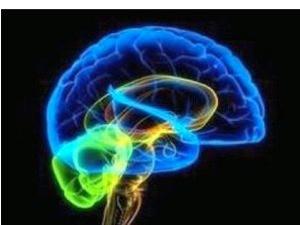 Мечта фантастов сбудется: износился старый мозг - поменял на новый.