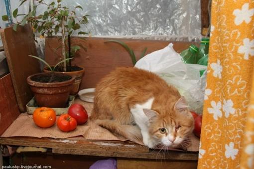 В квартире проживает также одноглазый кот. Фото автора