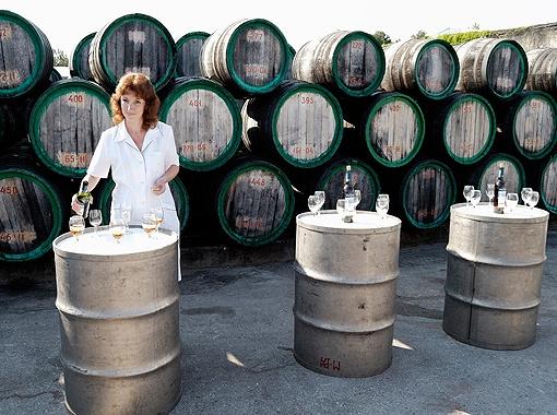В Феодосию съедутся лучшие виноделы Украины, Молдовы, России и Германии.