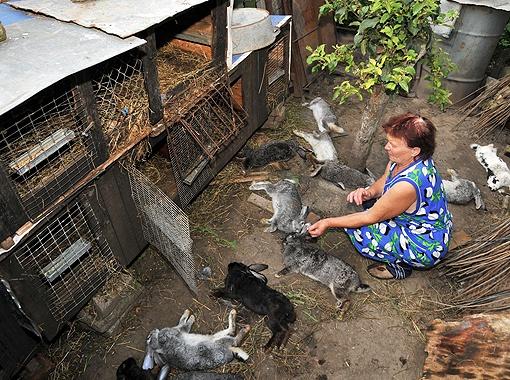 За одну ночь нечто подавило во дворе Марии Тимош из села Гряда 13 кроликов. Тушки были аккуратно выложены.