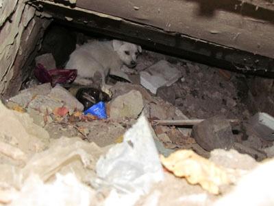 Двое щенков забились под ступеньки.