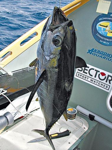 Словить на живца полуторакилограммовую рыбину - вопрос 30 секунд.