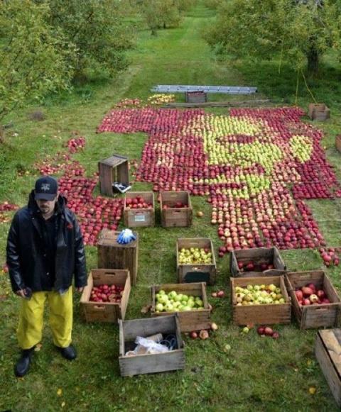 На картину пошло 3750 плодов. Фото Olivier Lefebvre