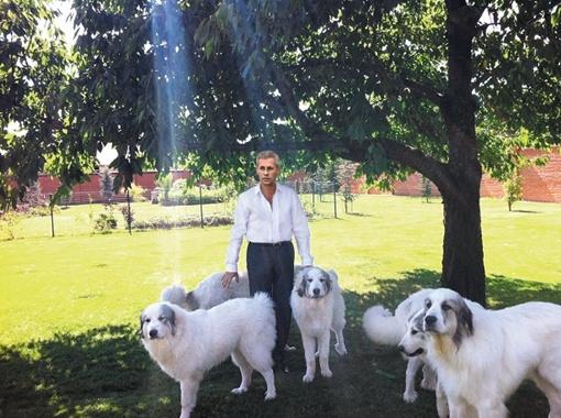 Константин Ржепишевский первый в Украине зарегистрировал породу пиренейская горная собака.