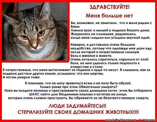 С помощью таких объявлений в Чернигове волонтеры пытаются остановить массовые убийства кошек.