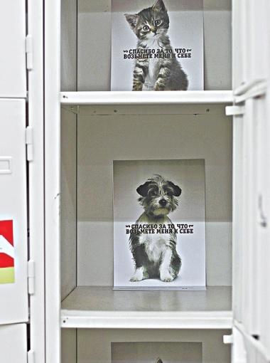 В супермаркетах на Киевщине поселились сотни дворняг. Животные охраняют сумки посетителей, пока те гуляют по магазинам. Так креативной рекламой волонтеры приюта