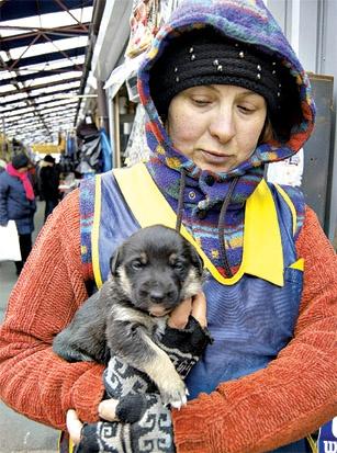 Очевидцы говорят, что от рук догхантеров погибло множество собак. Фото из архива
