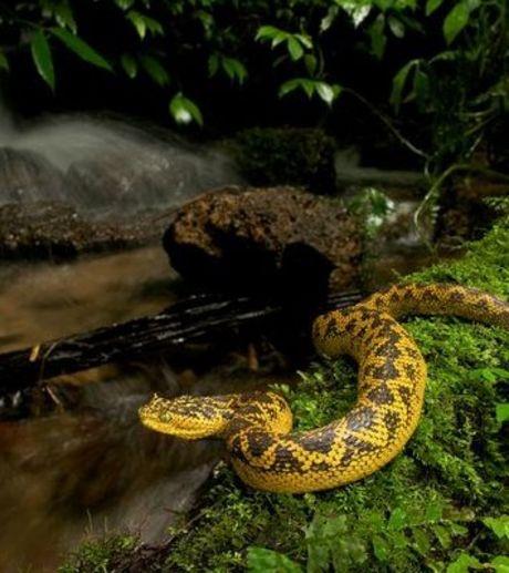 Так выглядит новое животное. Фото с сайта infuture.ru