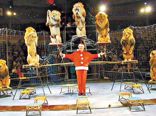 Владислав Гончаров - единственный в Европе дрессировщик, работающий только со львами-самцами. В его труппе - двенадцать