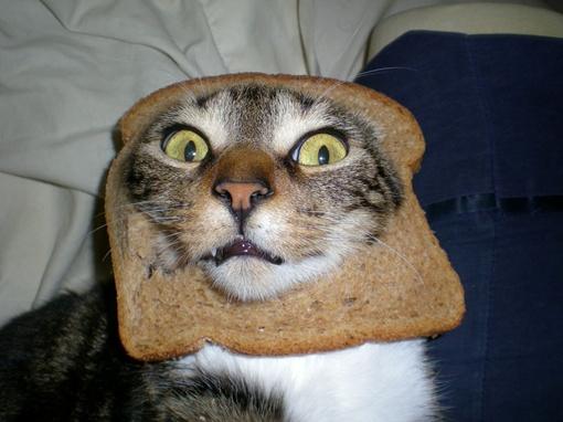 Кошки в шоке, владельцы - хохочут